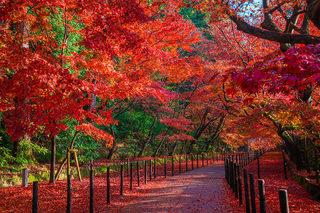 光明寺の紅葉-1.jpg
