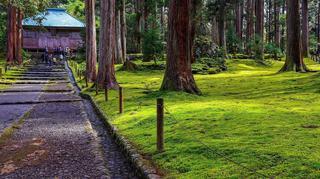 平泉寺白山神社-1.jpg